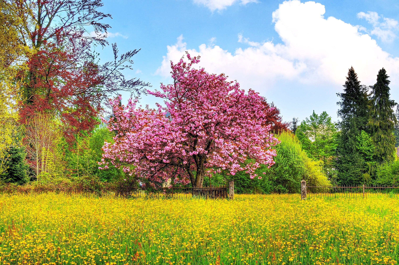 spring wallpaper free - HD1440×900